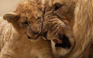 מרצים יורם יובל הרצאות הביולוגיה של הרגשות הרצאה